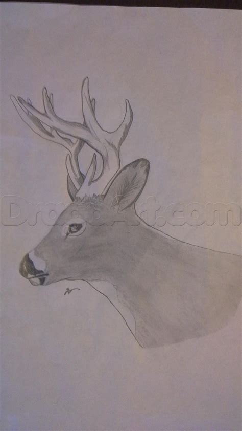 how to a deer how to draw a realistic whitetail deer step by step forest animals animals free