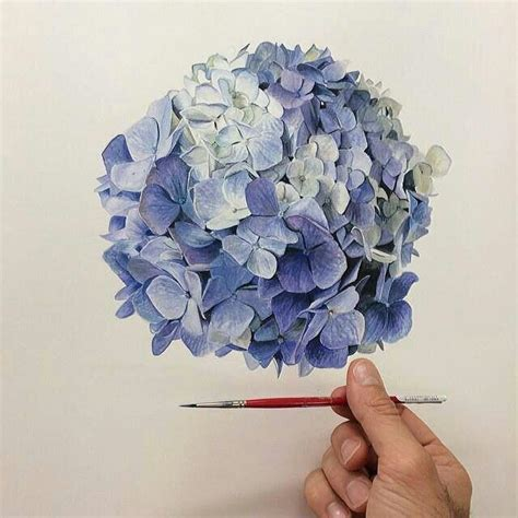 watercolor hydrangea tutorial 1000 images about botanical art on pinterest