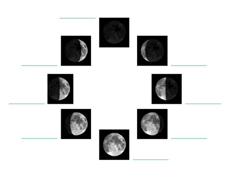 Phases Of The Moon Worksheets by The Moon Phases Worksheet Www Imgkid The Image Kid
