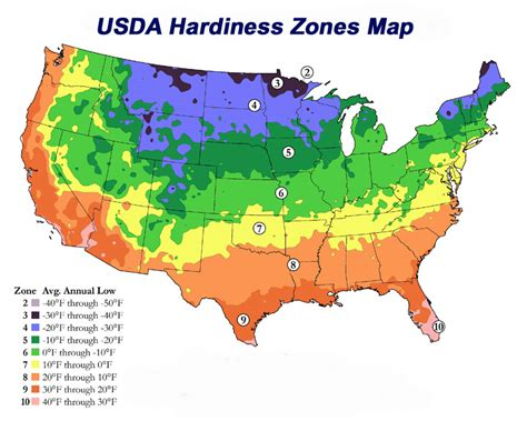 winterizing usda hardiness growing zones cold hardy hearty palm tree list