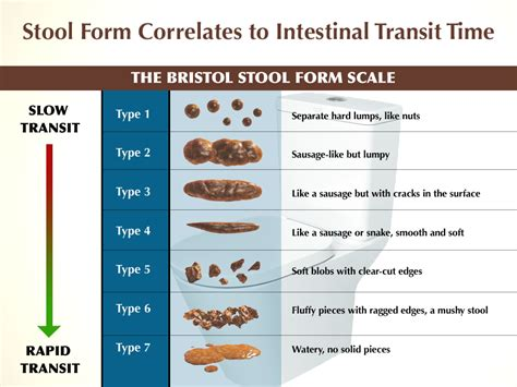Different Types Of Stool Tests by The 11 Most Common Keto Side Effects Drjockers