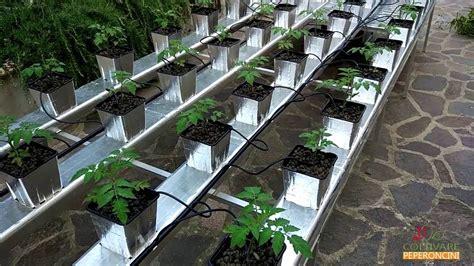 il giardino idroponico pomodori in idroponica orto biologico in giardino