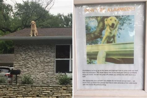 dog on a roof family posts note informing the world why their dog is on