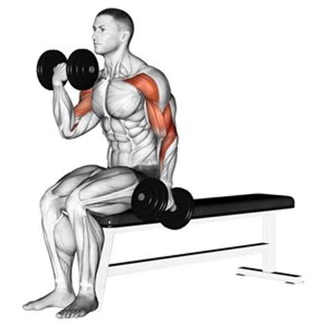 flessioni con manubri seduto su una panca inclinata esercizi con i manubri muscoli info