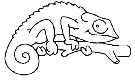 a color of his own chameleon coloring page coloring pages