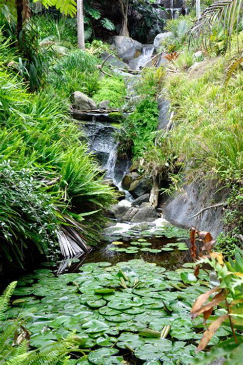San Diego Pond And Garden by Rainforest Ponds Waterfalls At San Diego Botanic Garden