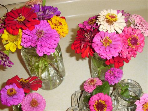 the old post road how to save zinnia seeds