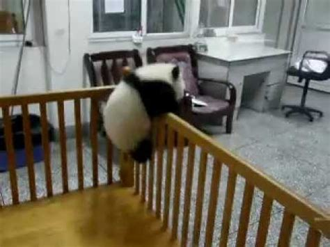 Baby Panda Climbing Out Of Crib by Escaping Baby Pandas