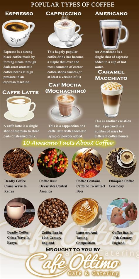 Popular Types of Coffee   Visual.ly