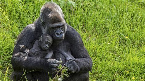 top  animals  exhibit human behavioral traits