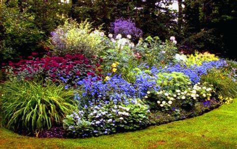 cespugli fioriti perenni resistenti al freddo cespugli fioriti fiori in giardino cespugli fioriti