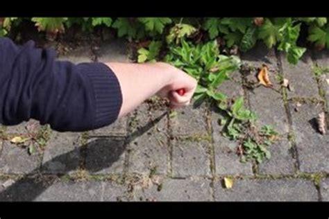 unkraut entfernen pflaster unkraut zwischen pflastersteinen entfernen