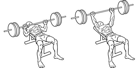 bench press diagram world bodybuilding guide on bench press