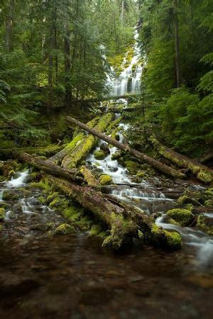 Wst 9906 Forest Print proxy falls willamette