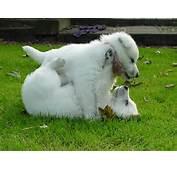 Fondo Perros Juguetones En Fondos De Pantalla