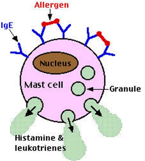 Detox Symtoms Or Histamine Response by Allergies And The Immune System Allergy Asthma
