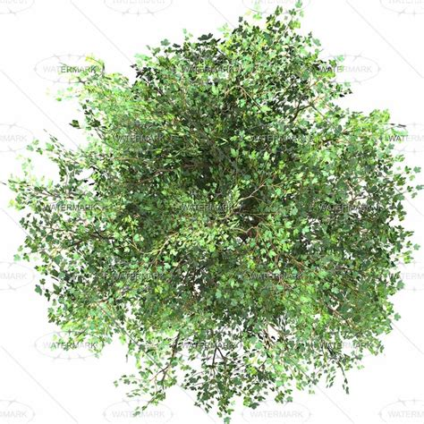trees top view google s 248 gning photoshop material