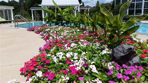 gardening cora cascade vinca spreading color  happiness