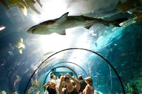 moody gardens aquarium galveston tx born and