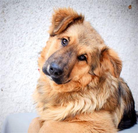 Psi Teddy Bears psi k adopci z 250 tulk絲 azyl絲 a neziskov 253 ch organizac 237