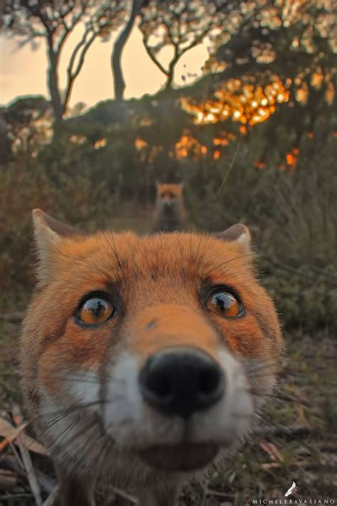 fear  palatable   foxs eyes  hes   human reflected   carrying
