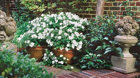 southern living container gardening white impatiens spectacular container gardening ideas