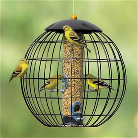 Globe Cage Bird Feeder new yorkers warned of quot songbird fever quot caused by salmonella food poison journal