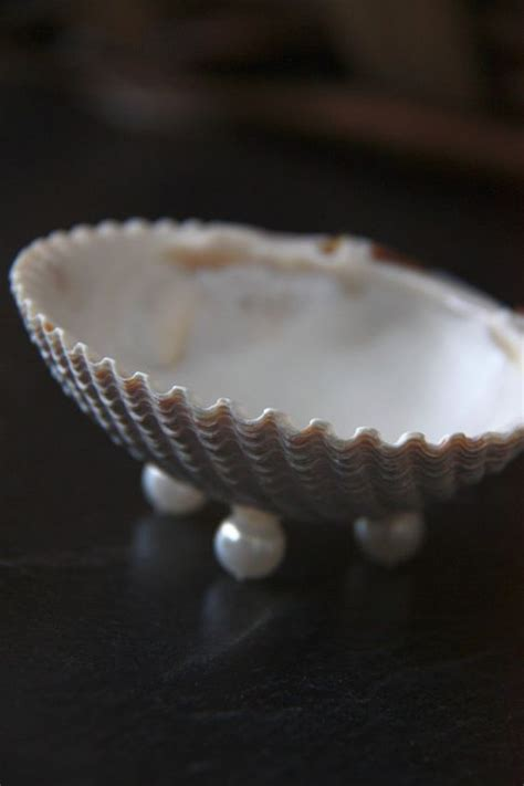 sea shell badezimmer real sea shell dish for soap or a shell jewelry by