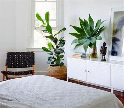 plante verte pour chambre une plante dans une chambre c est dangereux