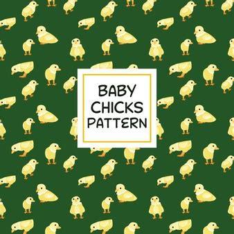 animali da cortile gratis polli pollo animali da cortile scaricare foto gratis