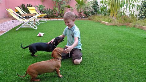 imagenes de jardines con animales casa hogar 187 jardiner 237 a