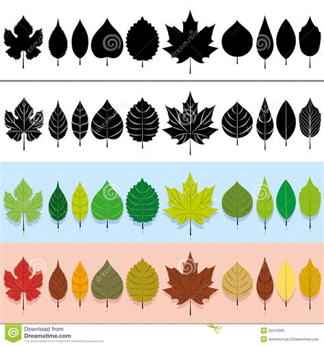 Garden Tree Types - vector leaves set royalty free stock photo image 32242965