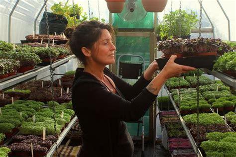 microgreens big nutrition   spaces  eco