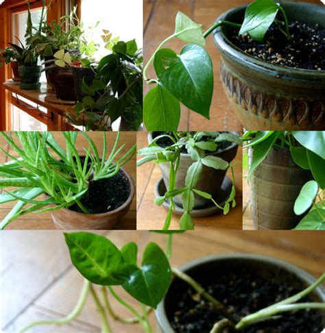 plants in house house plants highstreet culture