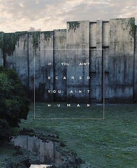 theme quotes in maze runner best 25 maze runner quotes ideas on pinterest the maze