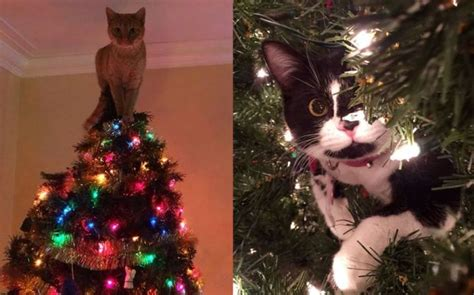 cat first seen christmas tree 15 adorable cats exploring painstakingly decorated trees mycoolbin