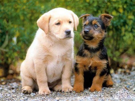 wallpaperfreeks hd cute dogs wallpapers