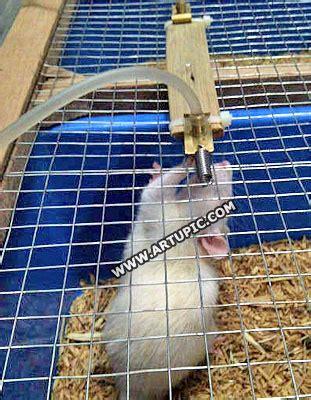 Tikus Putih Mencit Rat Semarang Cirebon rabbits drinkers nippel kelinci tikus rat hamster landak mini nepel kelinci hamster
