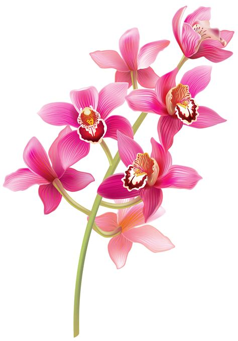 Ruby Red Vase Stem Pink Orchids Png Clipart Best Web Clipart