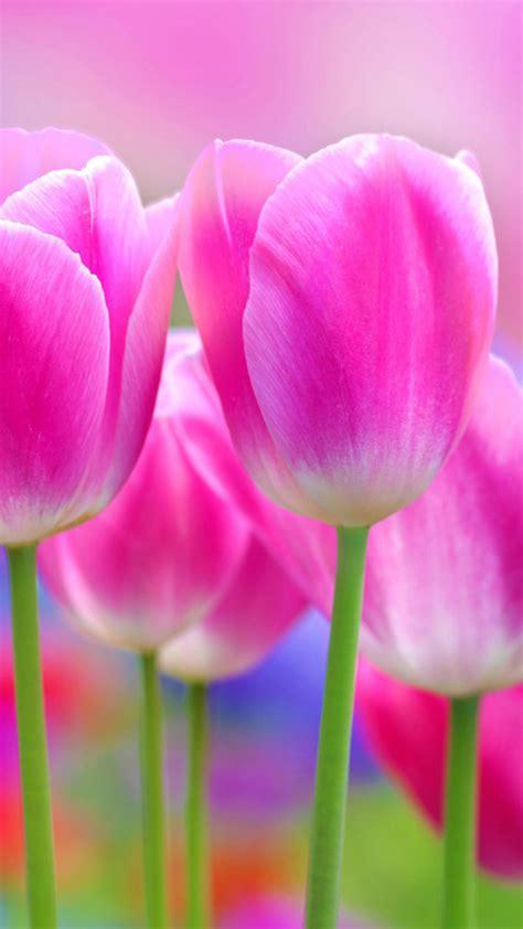 sfondi fiore sfondi fiori hd 71 immagini