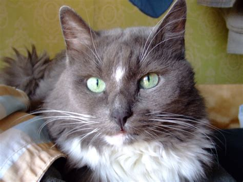 Universal Kitten ra3ggw universal radio customer cat coozya