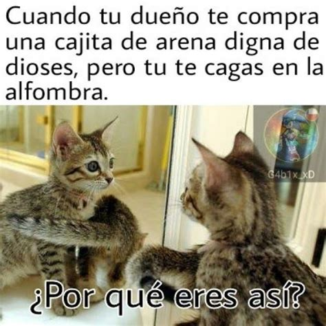 imagenes graciosas de gatos 17 best images about risas on pinterest stoner