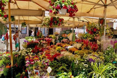 mercato fiori mercato dei fiori picture of mercato dei fiori rome