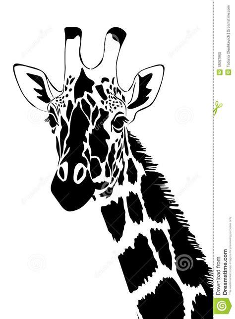 imagenes de jirafas para tatuar jirafa en blanco y negro foto de archivo imagen 18057960