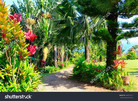 tropical garden flowers palm trees overlooking stock photo