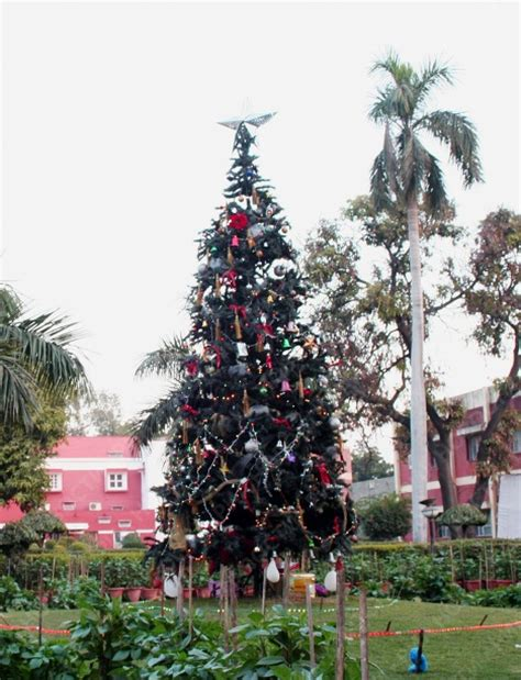 what time do they light the tree what of trees do they decorate in india during time www indiepedia org
