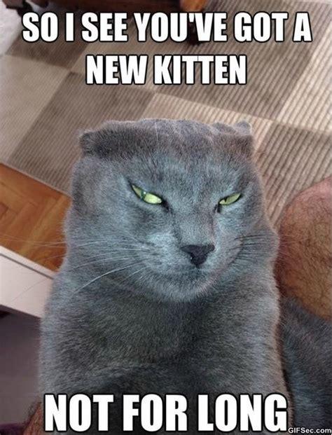 New Cat Memes - devious cat meme funny meme gif
