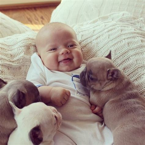 covered in puppies most powerful pictures of a baby covered in bulldog puppies taken barnorama