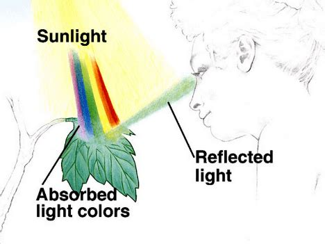 why are and green colors why are plants green