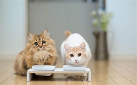 alimentazione casalinga per gatti alimentazione casalinga per cani e gatti i consigli dell